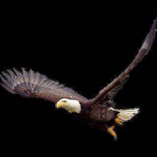 c528ceac aigle